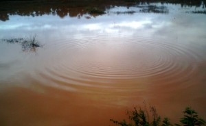 Ripples_in_a_Pond_at_Padmanabham