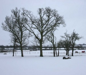 Trees_in_winter_-_geograph.org.uk_-_1657090
